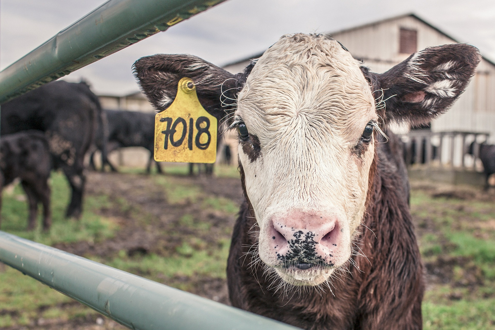 Farmers urged to get in touch about farm rate eligibility
