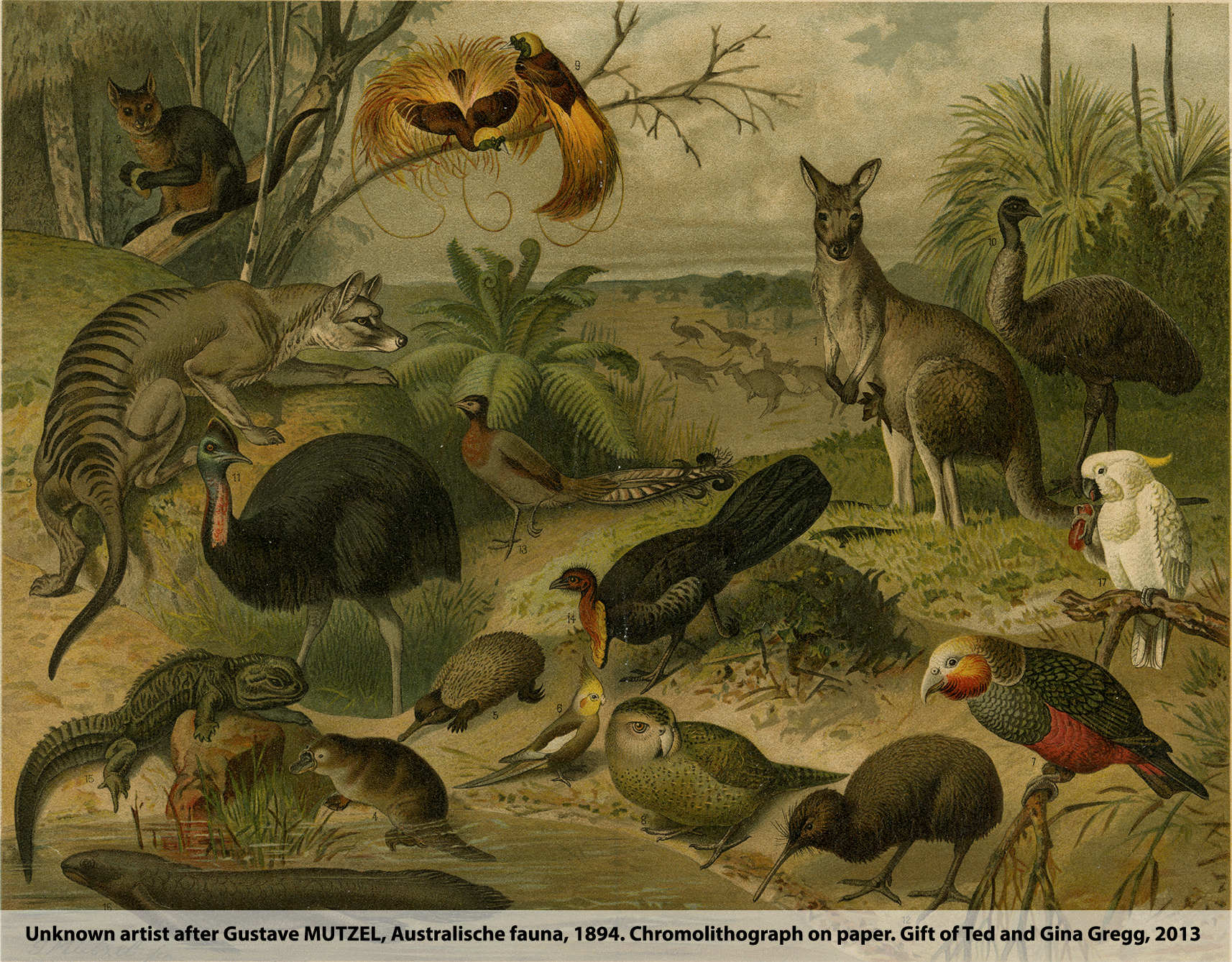 Animalia Australis - An Art Gallery of Ballarat Touring Exhibition