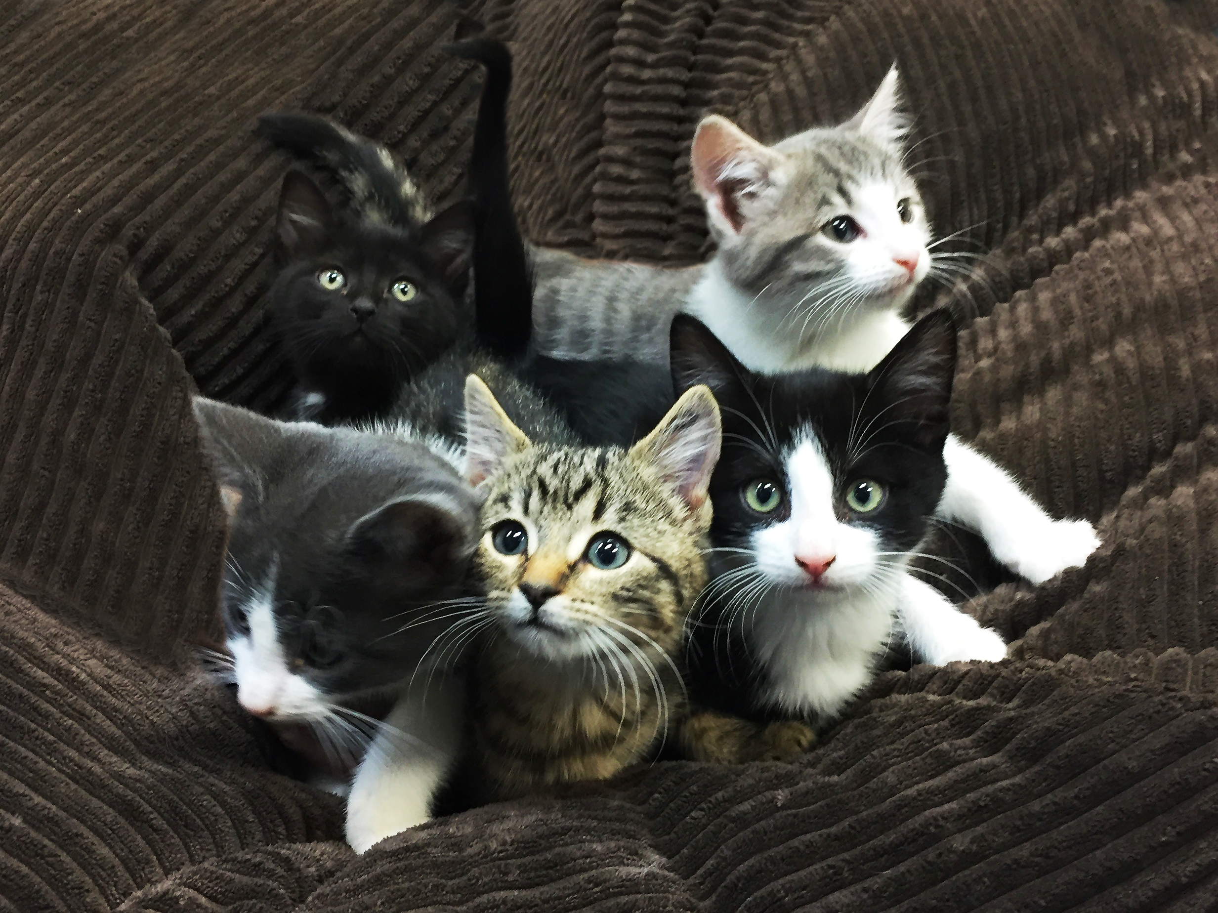 Kittens in need of loving home